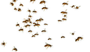 The Hacker Ethic bees